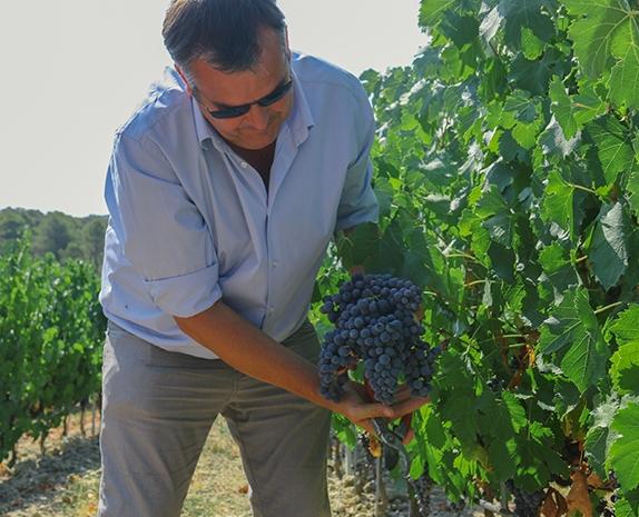 Culture viticole biologique - Domaine Métifiot